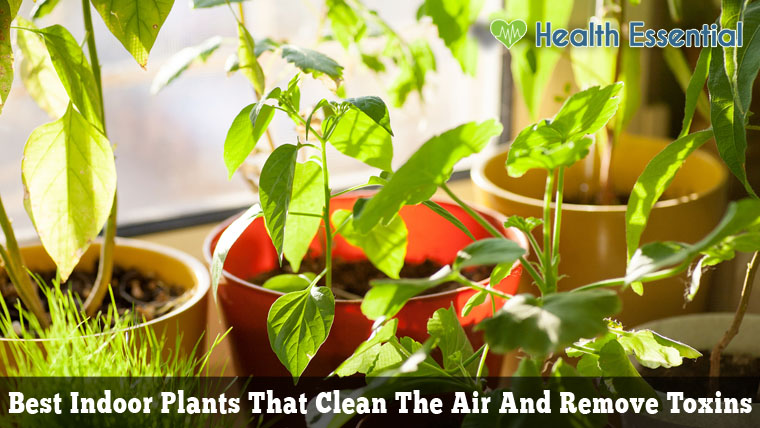 indoor-plants-air-toxin